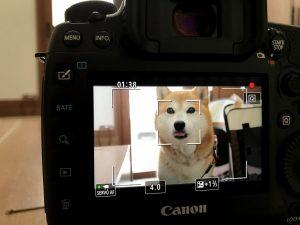 一眼動画撮影のワークショップ開催!